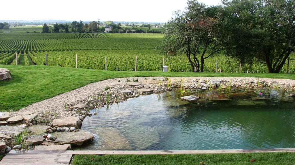 Koupac jez rka p roda do va zahrady for Como construir una piscina natural ecologica